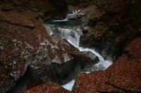 西沢渓谷の落葉②2018 - 光画日記