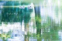 近所の池 ** - ふわふわ日和