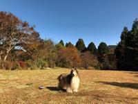 小春日和の箱根へ - まみみ暮らし