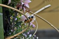生け花と鳥と・・・ - ベジタブルpartⅤ(鳥と共に日々是好日)