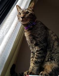 いつものように - キジトラ猫のトラちゃんダイアリー