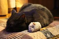 久々ぶるぶるマウス - ぎんネコ☆はうす