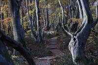 ブナの森 - Aruku