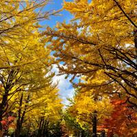 北海道大学散歩 - ゆるゆると・・・