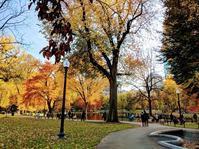 秋のボストン - ラマがいない生活