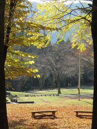 落葉、輝く。 - タビノイロドリ