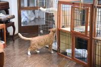 猫神様はサービス精神旺盛その31すでに慣れてるその1 - りきの毎日