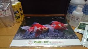 来年の金魚カレンダーだよ♪♪ - ~today's memory~