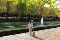 昭和記念公園 銀杏並木 - ルンコたんとワタシの心模様