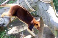 よこはま動物園ズーラシア2018年10月31日 - お散歩ふぉと
