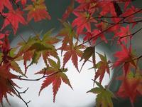 大町自然公園の紅葉はじめ - いや、だから 姉ちゃん じゃなくて ネイチャー・・・