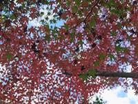 大町自然公園の紅葉はじめ - 2 - - いや、だから 姉ちゃん じゃなくて ネイチャー・・・