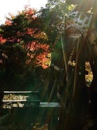 小田深山渓谷の紅葉11/11 - 徹の写真館