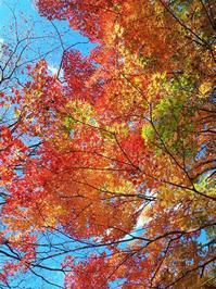 紅葉狩り日和 - ふくすけのコネコネ 編み編み てくてく日記