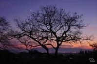 天理市崇神陵「月」細く - ぶらり記録:2 奈良・大阪・・・