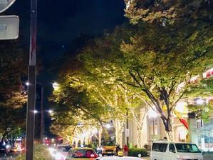 街路樹の秋模様〜今週の出演予定11/13から11/17〜 - マコト日記