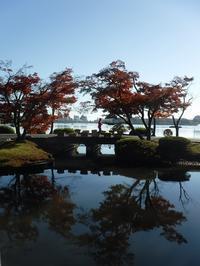 千波湖でモミジ - みとぶら