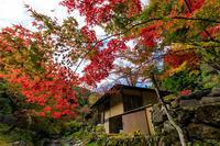 Opening!京の紅葉2018 山深き峰定寺の秋 - 花景色-K.W.C. PhotoBlog
