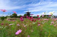 コスモス咲く法起寺 - 花景色-K.W.C. PhotoBlog