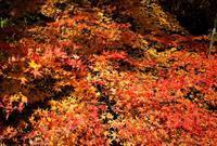 雲海人海、オヨ・オヨ!・・・坊村・明王院と奥山渓谷の紅葉 - 朽木小川より 「itiのデジカメ日記」 高島市の奥山・針畑からフォトエッセイ