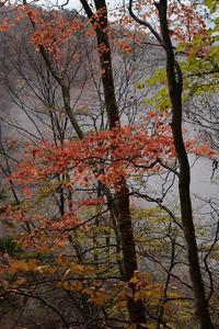 西沢渓谷の落葉⑥2018 - 光画日記