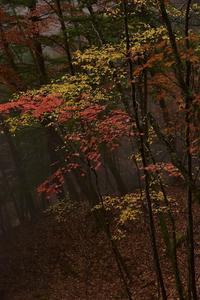 西沢渓谷の落葉⑦2018 - 光画日記