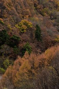 西沢渓谷の落葉⑨2018 - 光画日記