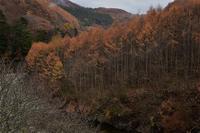西沢渓谷の落葉⑩2018 - 光画日記