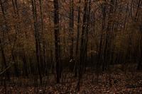西沢渓谷の落葉⑧2018 - 光画日記