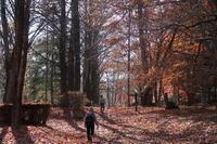森林公園 - ひとりごと・・・