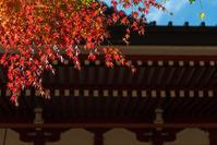 一度はおいでよ比叡山 -2- - Photo Terrace