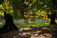 木洩れ日に浮かぶ - 彩りの軌跡