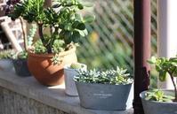 日光浴 - 絵と庭