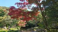 恒例、秋の京都 - 笠間市 ともべ幼稚園 ひろばの裏庭<笠間市(旧友部町)>