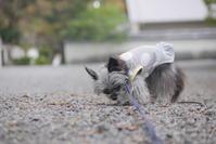 京散歩~なずなと京都御苑~ - ぶらり休暇