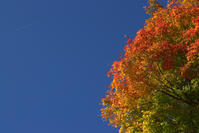 見上げる秋 - 京都ときどき沖縄ところにより気まぐれ