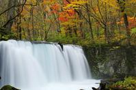 紅葉の奥入瀬渓流-1 - 自然と仲良くなれたらいいな2