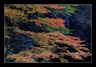 渓谷の紅葉 - Desire