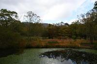 箱根の旅@箱根湿生花園 - Buono Buono!