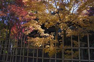 18.11.03:福岡の早い紅葉は呑山観音寺6 - 純さんのスナップショットで四季彩歳