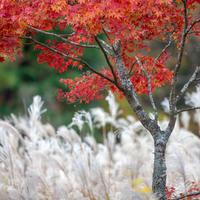 キララの森にて - え~えふ写真館