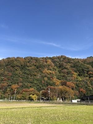 11月11日 秋色 - マイルスくんが行く(マイルス社長のパラドックスな日々)