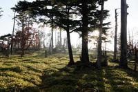 大台ケ原~遊歩道周辺と大蛇ぐら - katsuのヘタッピ風景