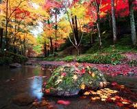 秋は二度目の春であり・・・ - 心紋様