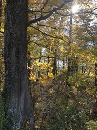 秋の八ヶ岳へ - kukka  kukka