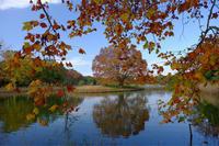 秋が来た - ルンコたんとワタシの心模様