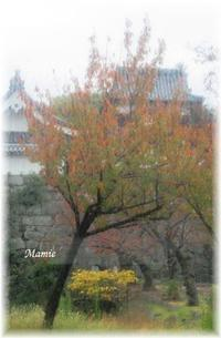 秋の雨 - おだやかに たのしく Que Sera Sera