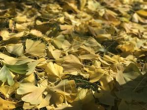 うす緑葉の無情、猫の尻尾 - 幾星霜