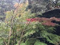 🍁真っ赤な真っ赤な紅葉まつり🍁 - 川豊本店ブログ
