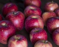 りんごweek - ダイドコ帖
